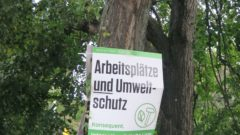 Plaste-Plakat am Baum am Albertplatz