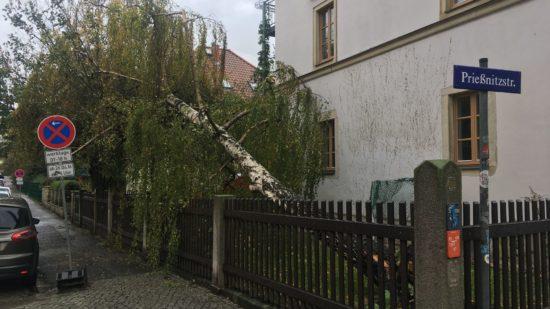 Umgestürzte Birke auf der Hohnsteiner Straße - Foto: Klaus Heidemann