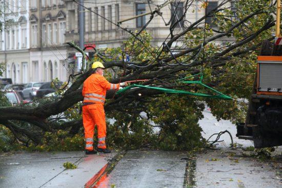 Baum stürzte auf Oberleitung auf der Leipziger Straße - Foto: Roland Halkasch
