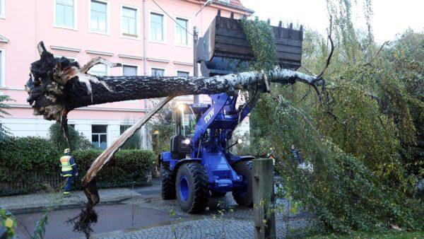 Die Birke wurde mit einem Radlader geborgen. Foto: Roland Halkasch