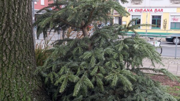 Weihnachtsbaumlagerstätte an der Ecke Bischofsweg/Kamenzer Straße