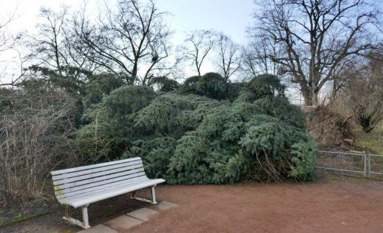 Im Rosengarten wird derzeit aufgeräumt. Achtung - die Wälder dürfen nicht betreten werden.