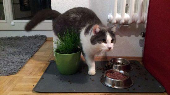 Zugelaufene Katze
