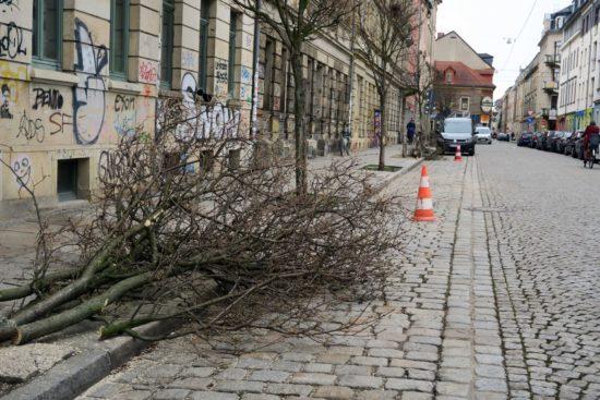 Drei Bäume an der Sebnitzer wurden gefällt.