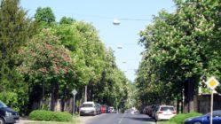 Radeberger Straße voller Blüten