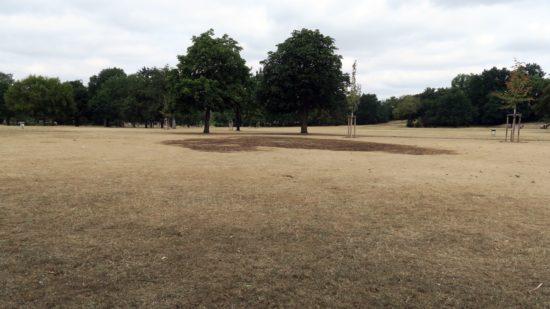 An einigen Stellen ist das Gras inzwischen richtig schwarz.
