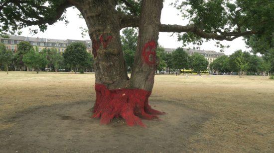 Bäume auf dem Alaunplatz müssen noch viel mehr aushalten als nur Trockenheit.