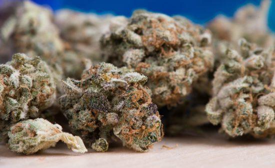 In der Wohngemeinschaft beschlagnahmte die Polizei Cannabis