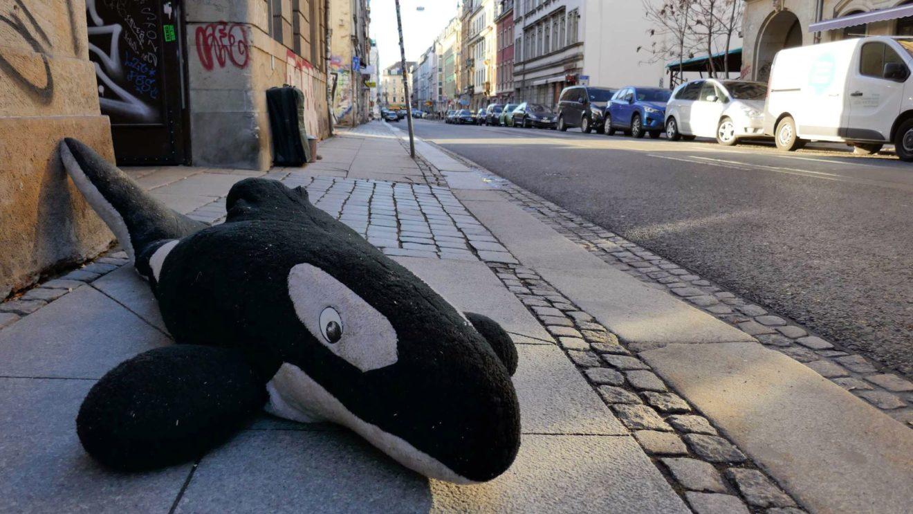 Kuscheliger Meeres-Säuger auf der Görlitzer Straße