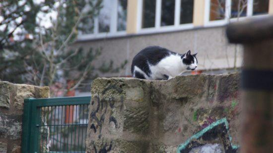 Heißt diese Katze Paul?