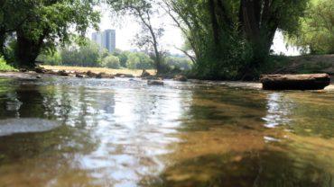 Nur ein handbreit Wasser an der Mündung der Prießnitz.