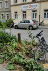 Straßenbaumreste auf der Schönfelder Straße