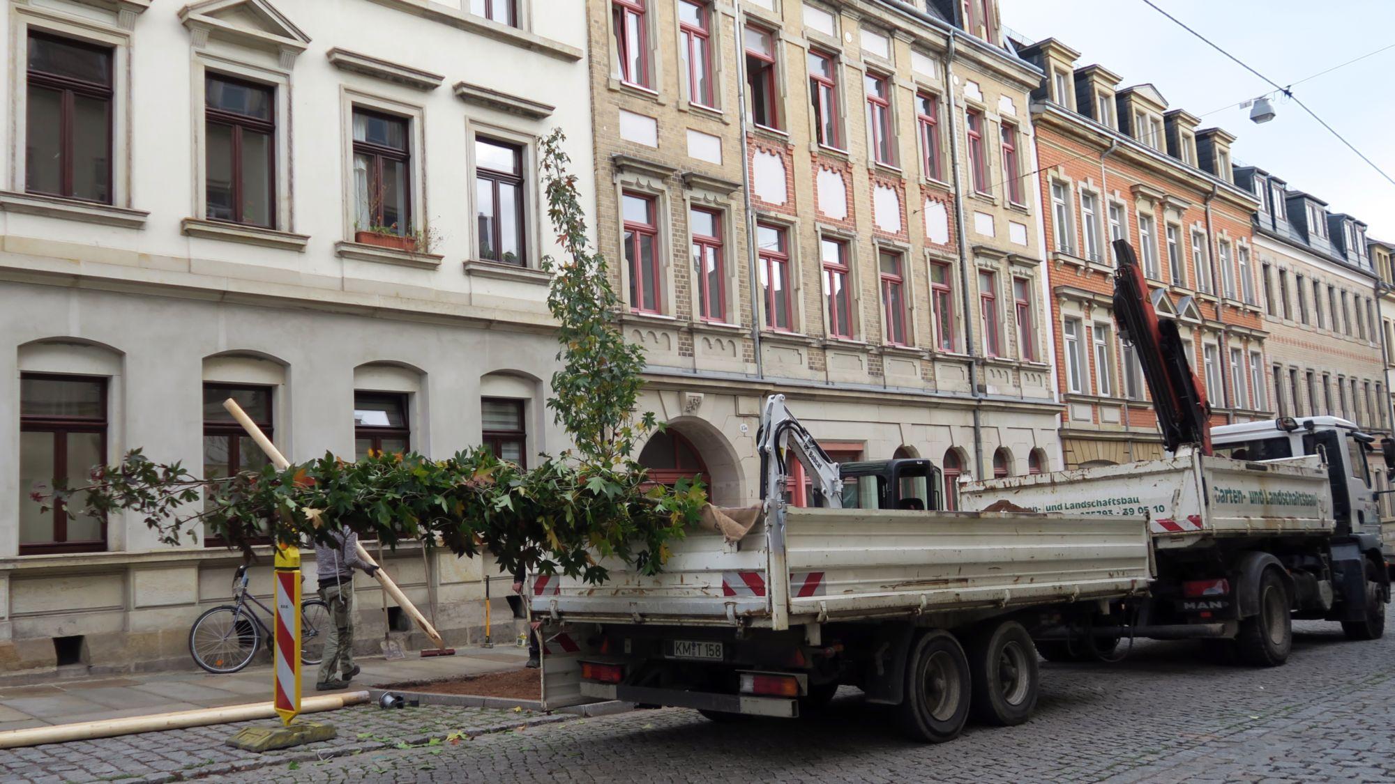 Neue Bäume für die Schönfelder Straße