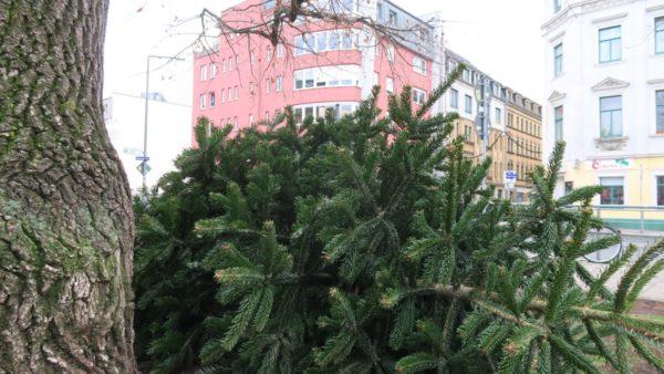 Weihnachtsbaum entsorgen - aber bitte nur abgeschmückt.