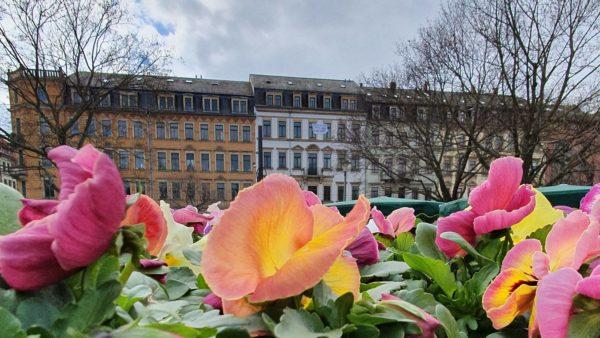Blumen am Alaunplatz - der Wochenmarkt ist wieder erlaubt