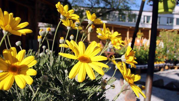 Es gibt Blumen in allen vorstellbaren Farben.