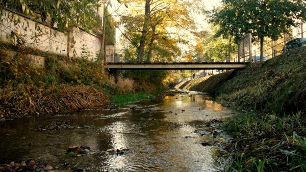 Auch die Prießnitz bietet Lebensraum für zahlreiche Arten der Stadtnatur.