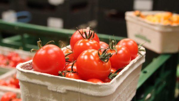 Frische Tomaten aus der Region.