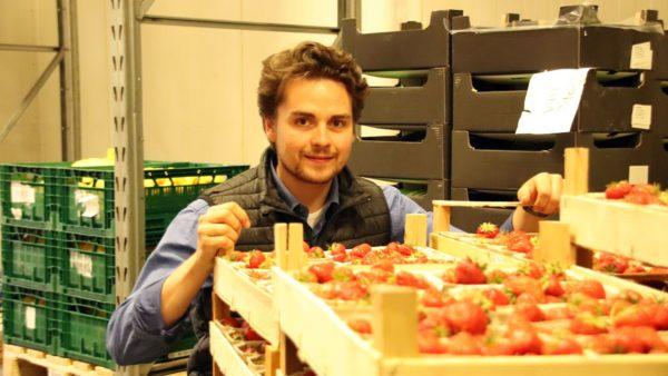 Auf Frische kommt es an - bei Erdbeeren ganz besonders.