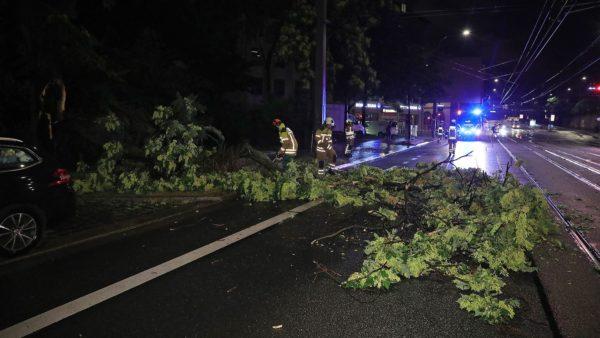 In der Nähe der Kreuzung Anton-/Leipziger Straße war ein großer Ast vom Baum abgebrochen.