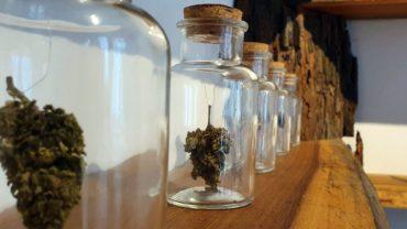 Sieht aus wie Cannabis und riecht auch so, nur die bekannte Wirkung bleibt aus.