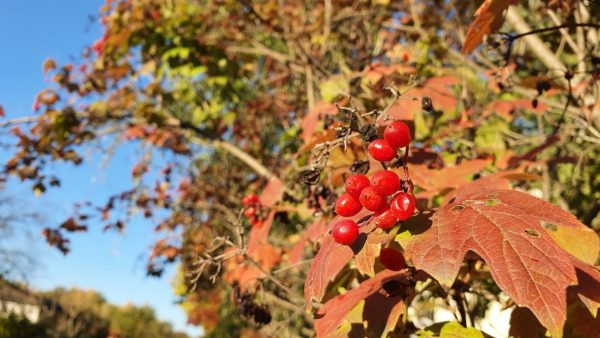 Mitten im Herbst gibt's ab morgen die Winterzeit.