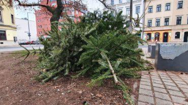 Weihnachtsbaumlagerstätte am Alaunplatz