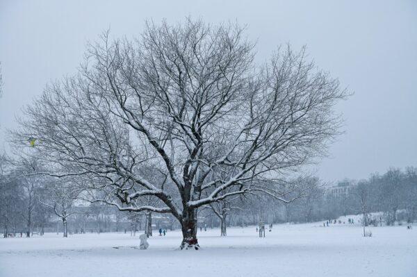 Das Bäumchen hat sich einen Wintermantel angelegt. Foto: Anja Schneider
