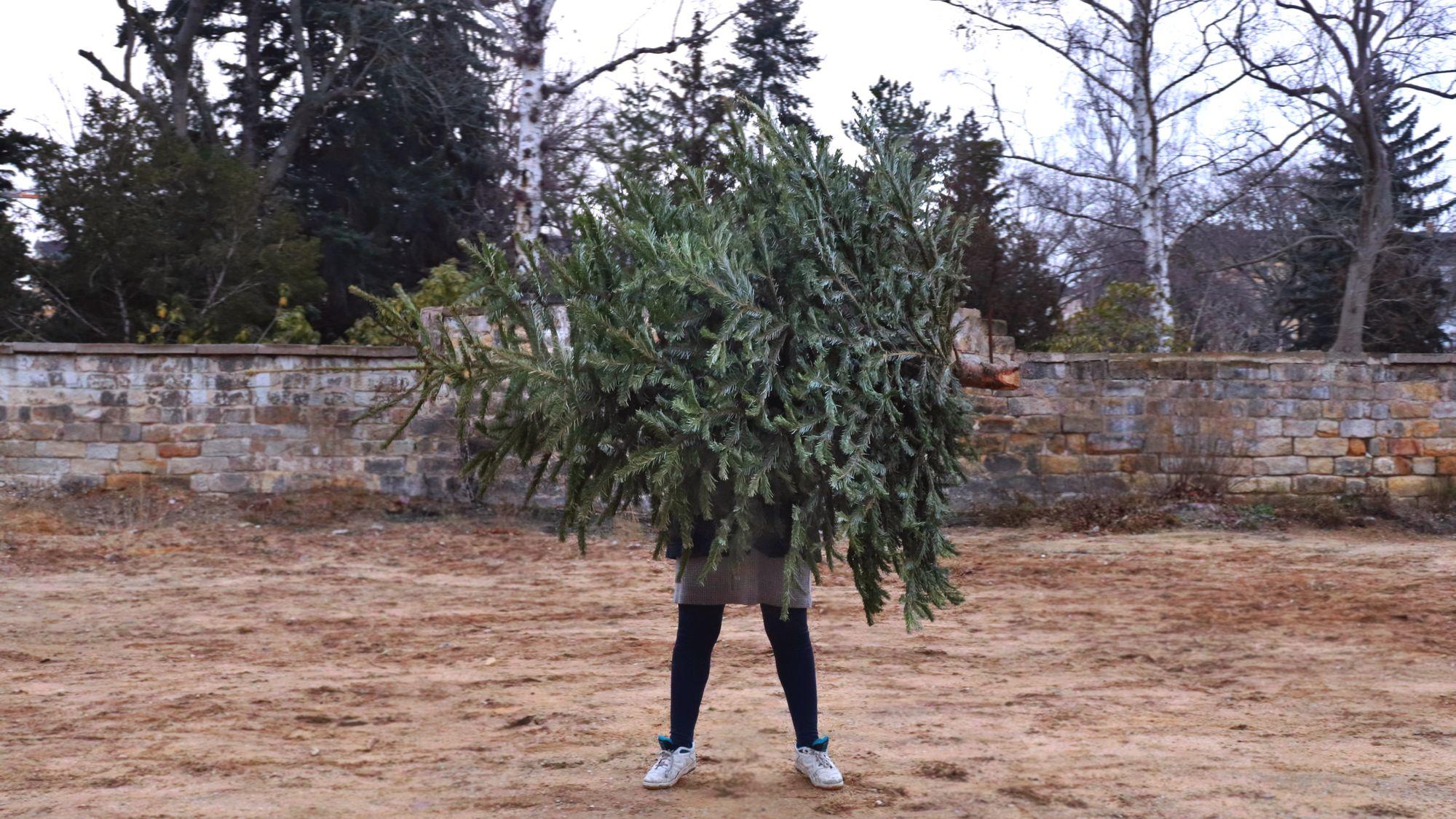 Karolin mit ausgemustertem Tannenbaum
