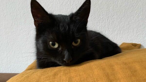 Gefundene Katze