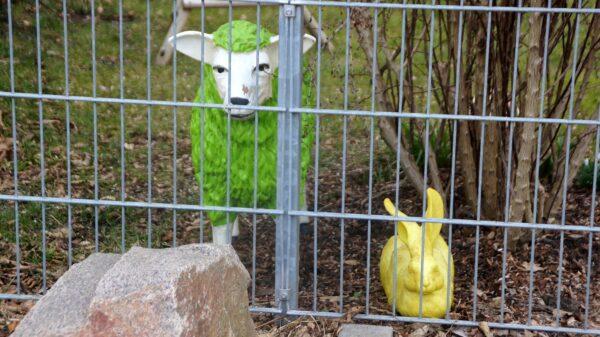 Wo Schaf und Hase guten Tag sagen. Foto: Philine