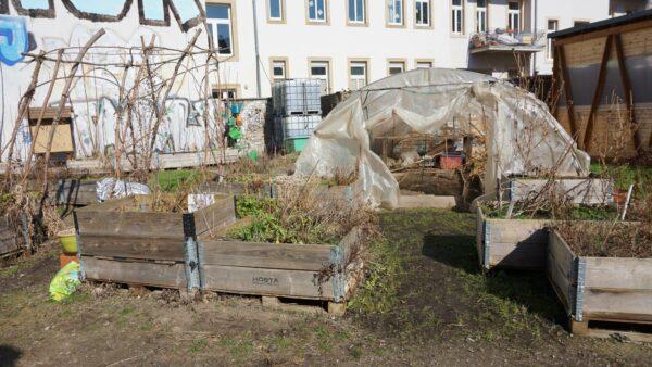 Die Hochbeete und der Folietunnel stammen noch vom alten Grundstück am Bischofsplatz.