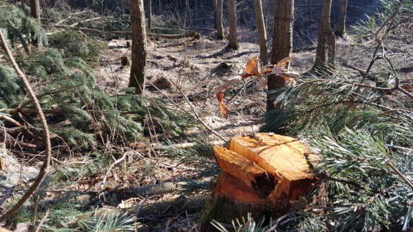 Hier riecht's nach Holz - Foto: Jonas Breitner