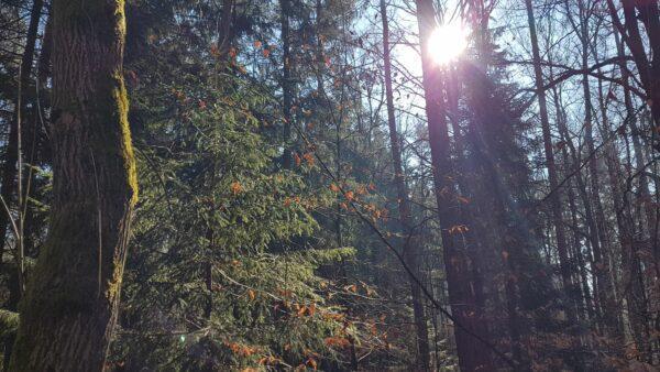 Wald und Moos und Sonne - Foto: Jonas Breitner