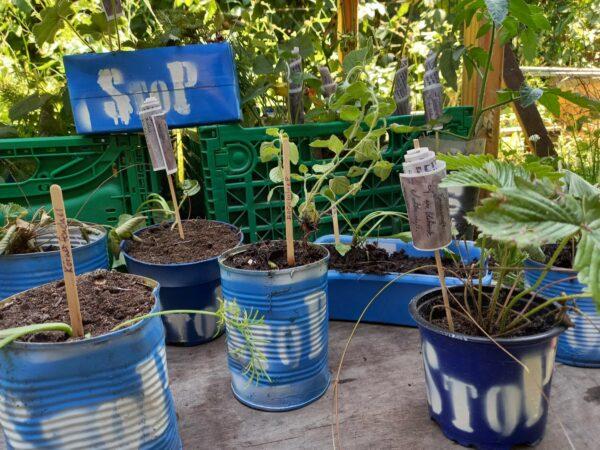Pflanzen für Neustädter*innen und Besucher*innen