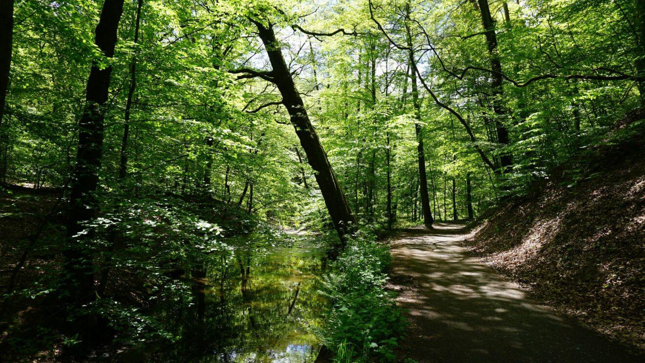 Wirkt alles andere als Trocken: Die Grüne Heide - Foto: Jonas Breitner