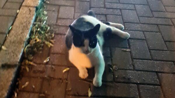 Katze auf Bischofsweg gefunden