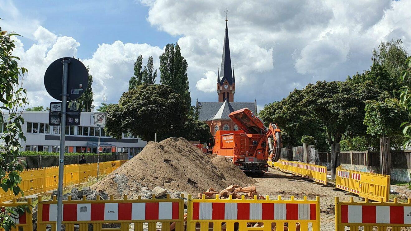 Sie machen aus der Straße zur Petri-Kirche eine kleine Allee, die Kugel-Ahorne