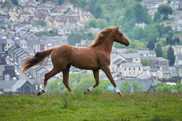 Dream Horse im Thalia