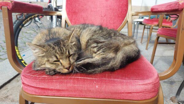 Verletzte Katze gefunden