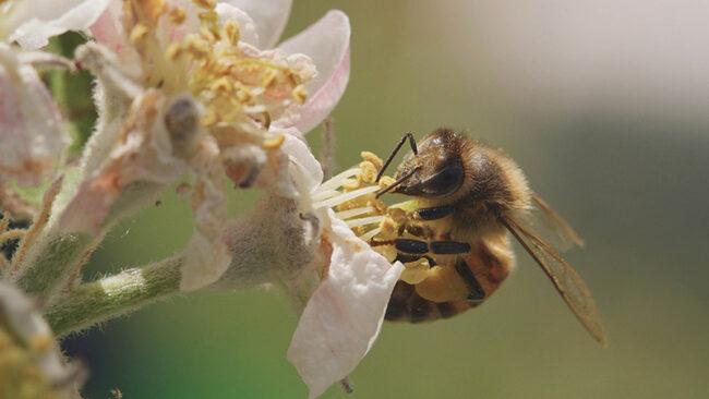 Tagebuch einer Biene in der Schauburg