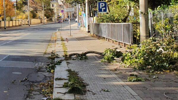 Heruntergebrochener Ast auf der Bautzner Straße