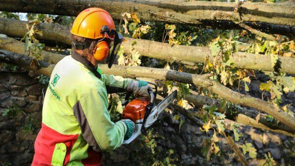 Mitarbeiter des Staatsbetrieb Sachsenforst bei der Beseitigung der Sturmschäden - Foto: Tino Plunert
